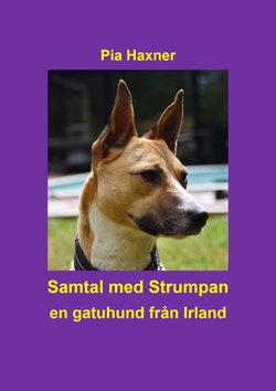 Samtal med Strumpan - en gatuhund från Irland